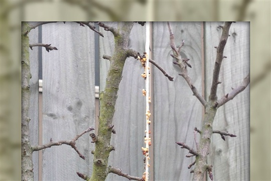 How to Make Your Own Pinecone Bird Feeder