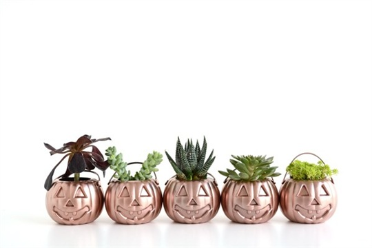 Mini Rose Gold Pumpkin Planters