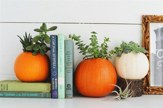 DIY Pumpkin Succulent Planters