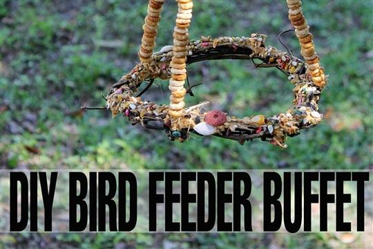DIY Bird Feeder Buffet